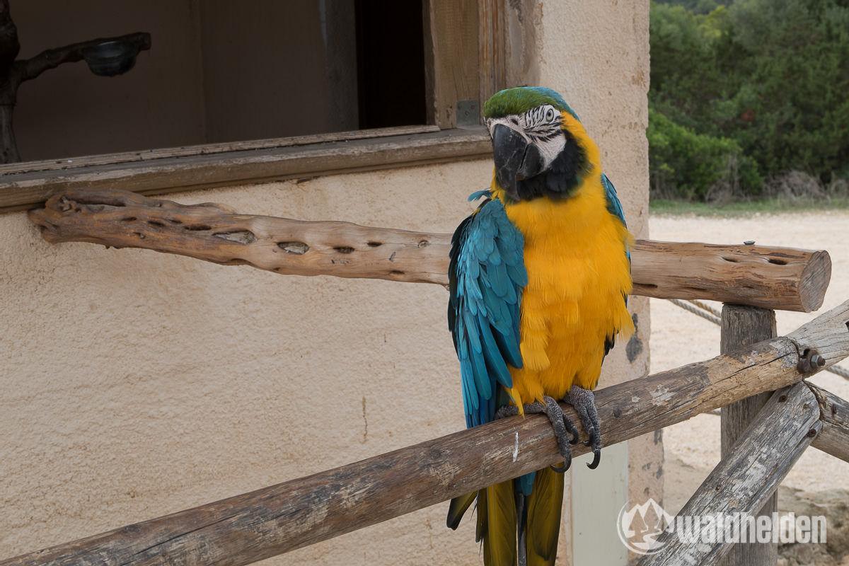 Papagei am Castell Punta de N Amer