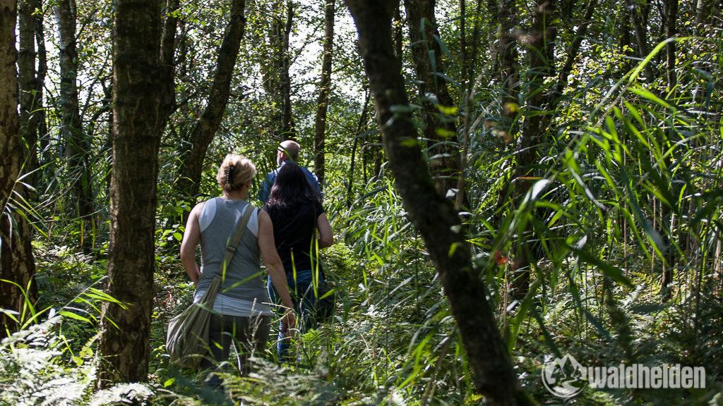 Auf münsterländer Dschungelpfaden geht es zur Aussichtsplatform im Münsterland.