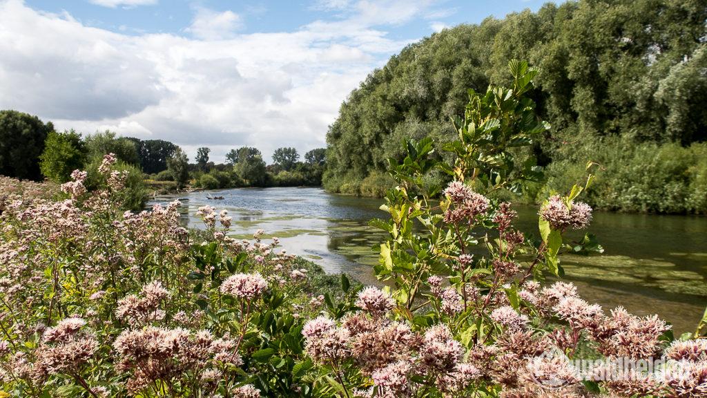 Die Klostermersch ist Lebensraum für zahlreiche seltene Pflanzen und Tiere.