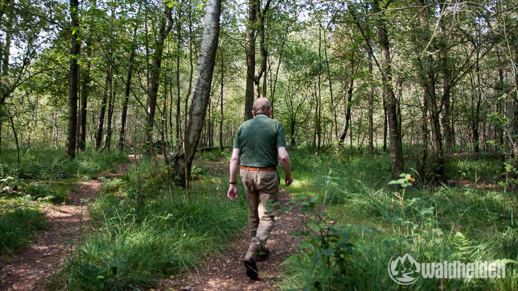 Auf alten Schmugglerpfaden durchkämmen wir das Witte Venn auf der Suche nach den Hochlandrindern.
