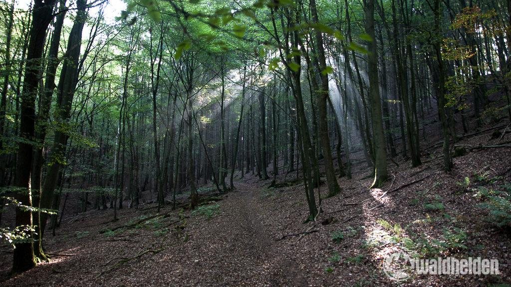 Westerwaldsteig Sonnenstrahlen im Wald