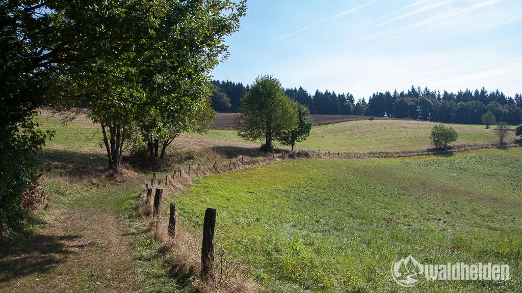 Westerwaldsteig Wiese
