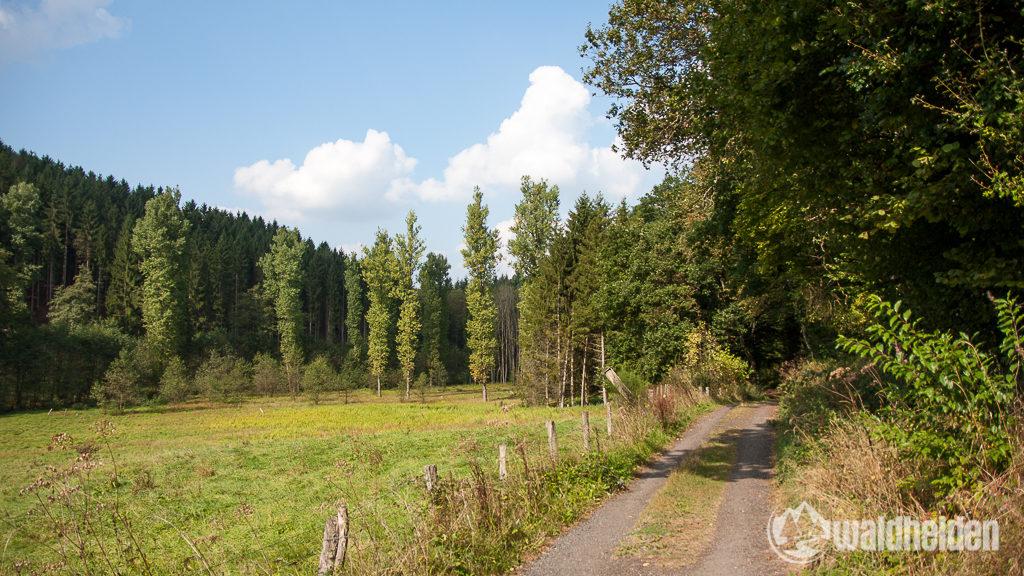 westerwaldsteig-3
