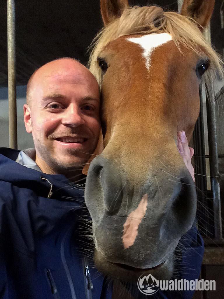 Reiten im Sauerland - Kelly und ich verstehen uns auf Anhieb