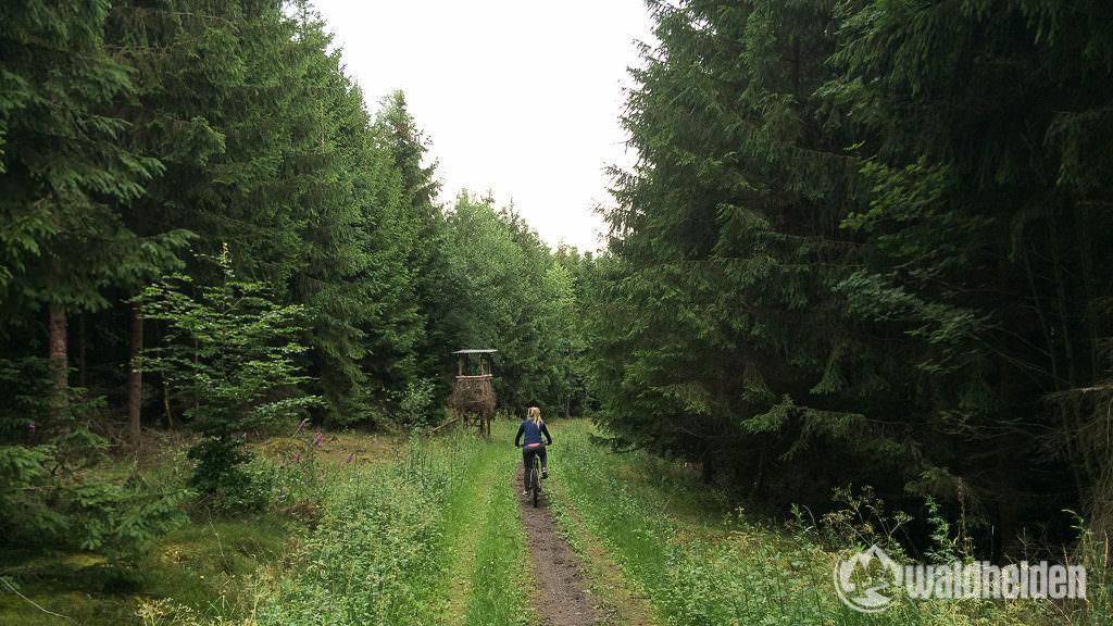 Trailsurfen im Sauerland - zurück zum Hotel geht es über schmale Pfade