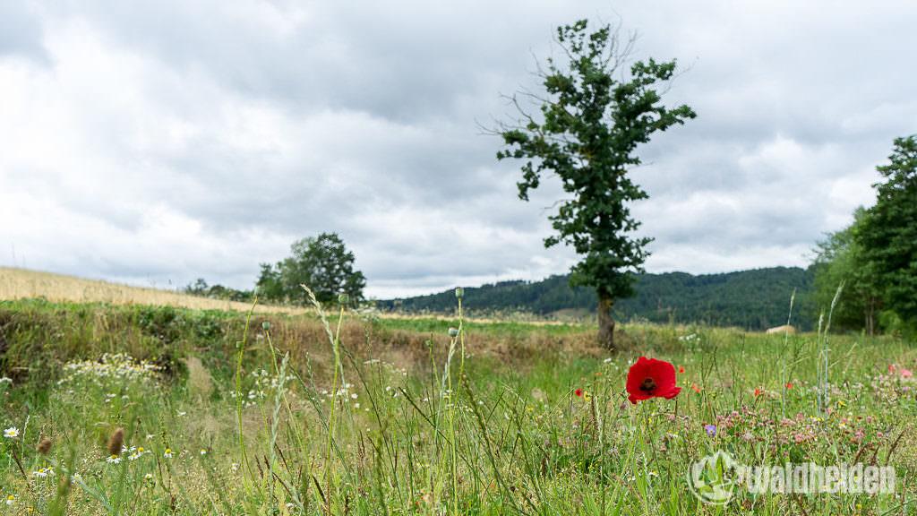 Aktivurlaub im Sauerland - Unterwegs im NationalparkZentrum Kellerwald