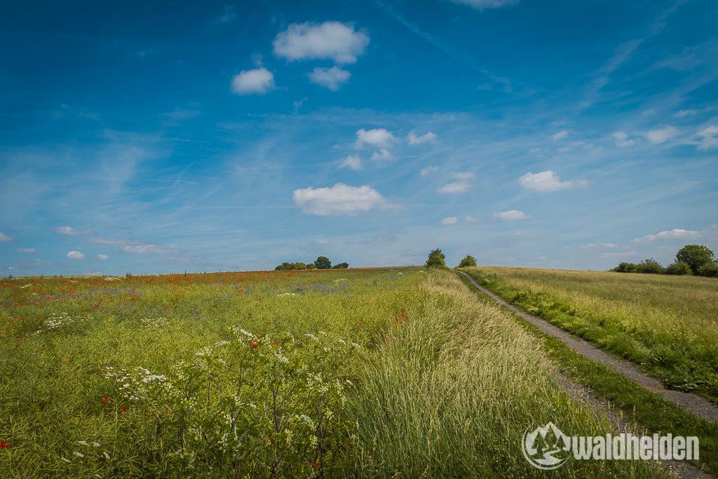 GeoRadroute-Ruhr-Eder-Wildwiese
