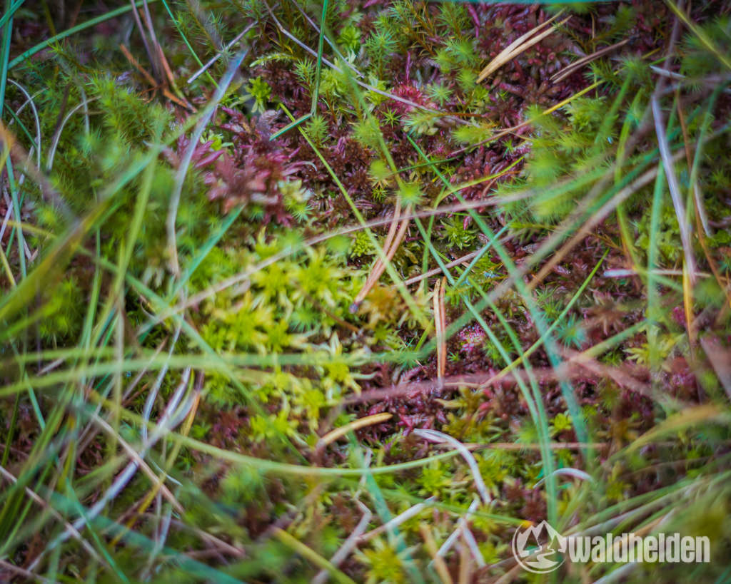 Ferienland Schwarzwald Sonnentau Blindensee