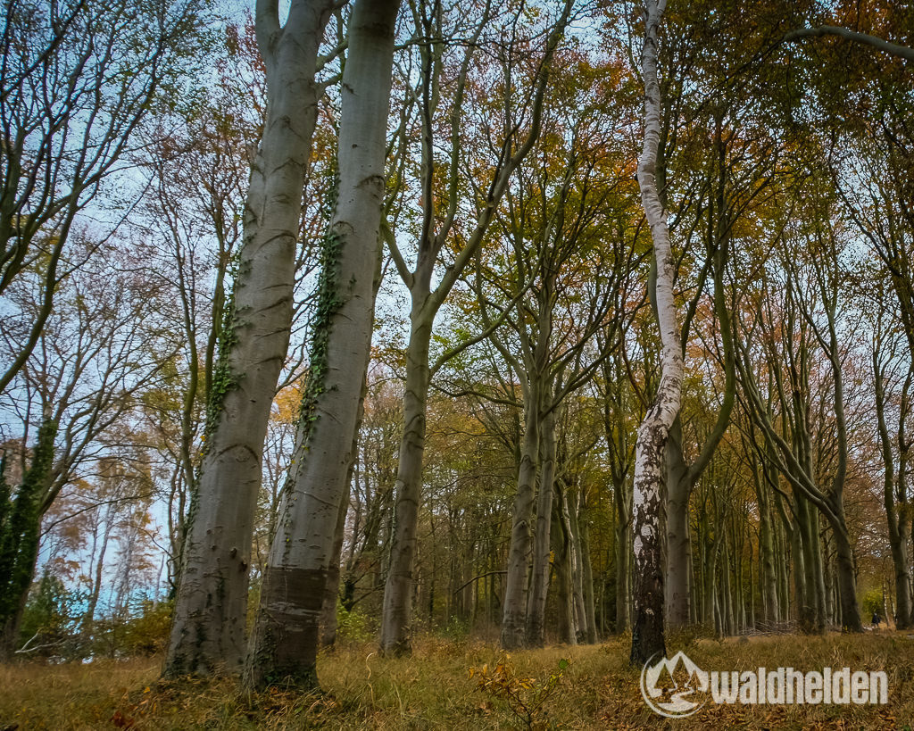 Warnemuende Wandern Wellness Gespensterwald