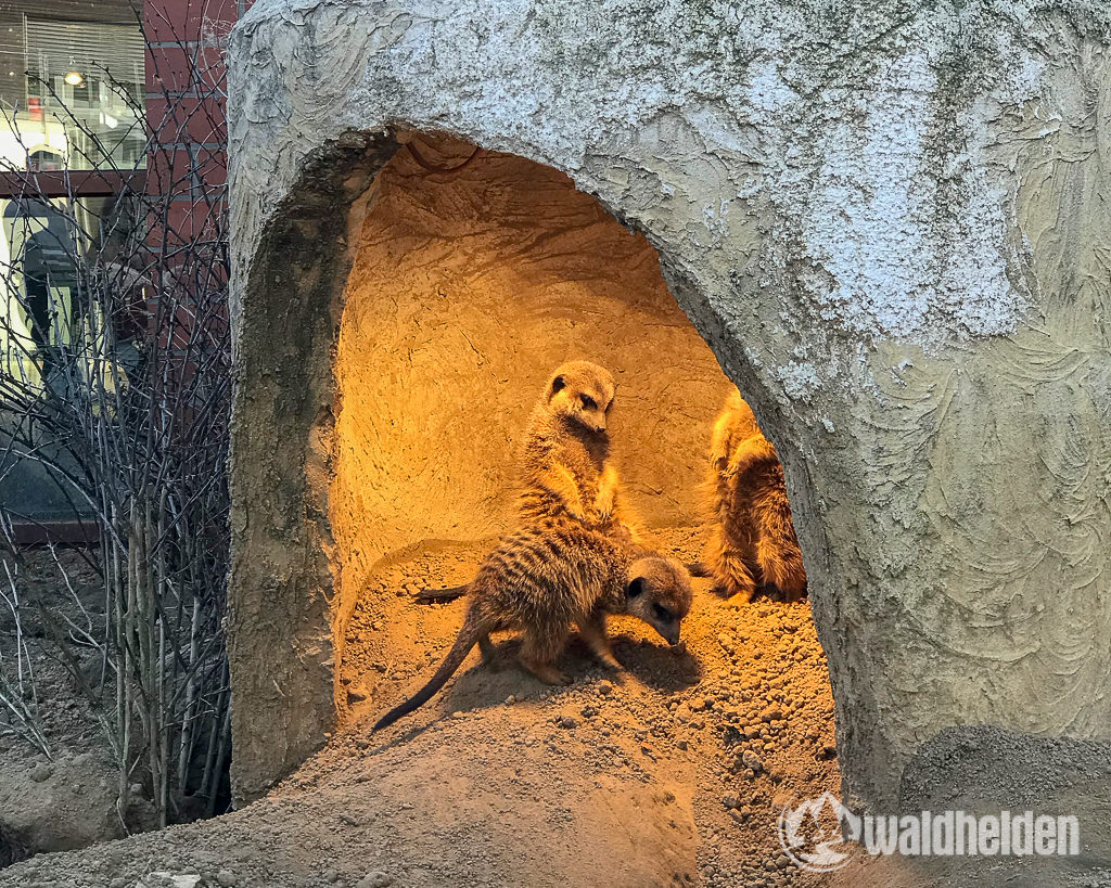 Tierpark Fossilium Bochum