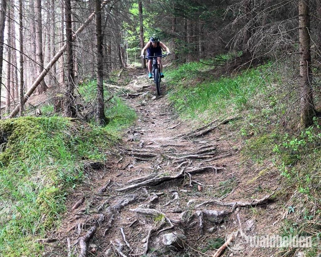 Rosadira Bike Wurzelteppich