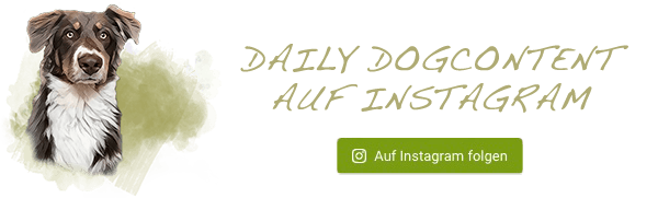 Hundeblog auf Instagram