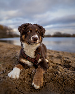 Hundefotografie Kurs
