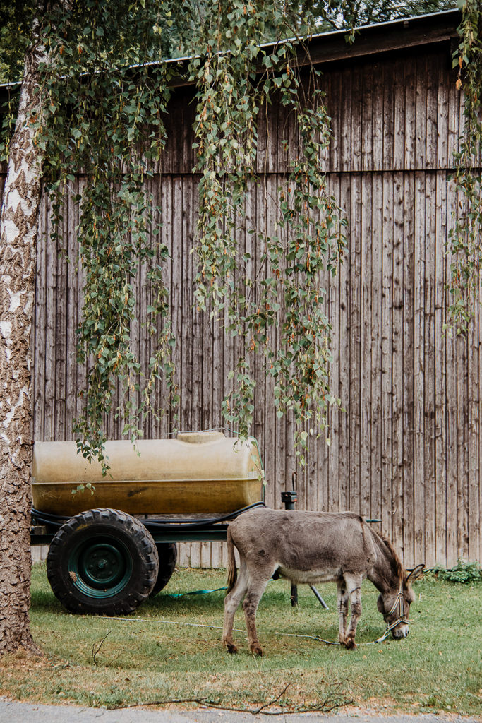 SauerlandRadring Esel