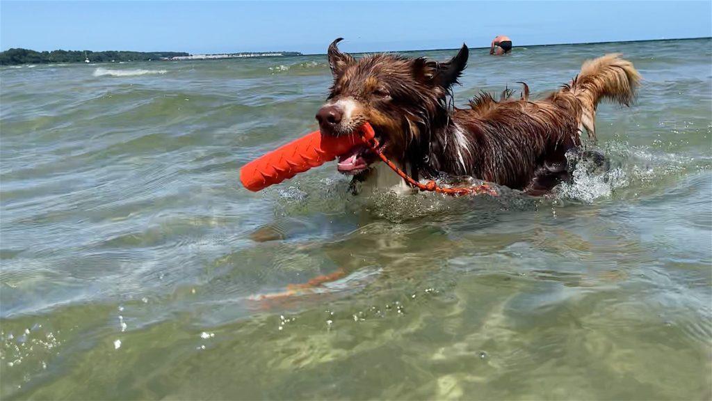 Ostsee Camping Hundestrand Wohlenberger Wiek