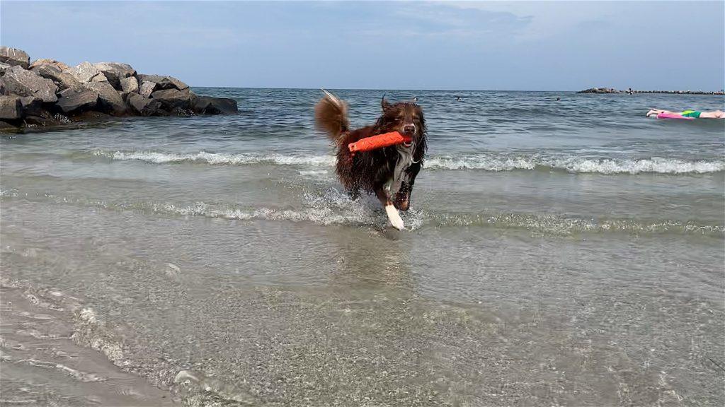 Wasser Spieli Hund