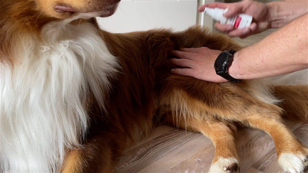 Wohnmobil mit Hund Reiseapotheke