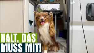 Wohnmobil mit Hund - Diese 25 Dinge müssen mit! [Plus Checkliste]